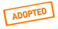 Adopted Lets Adopt